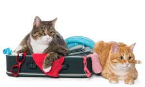 viaggiare con il gatto in aereo