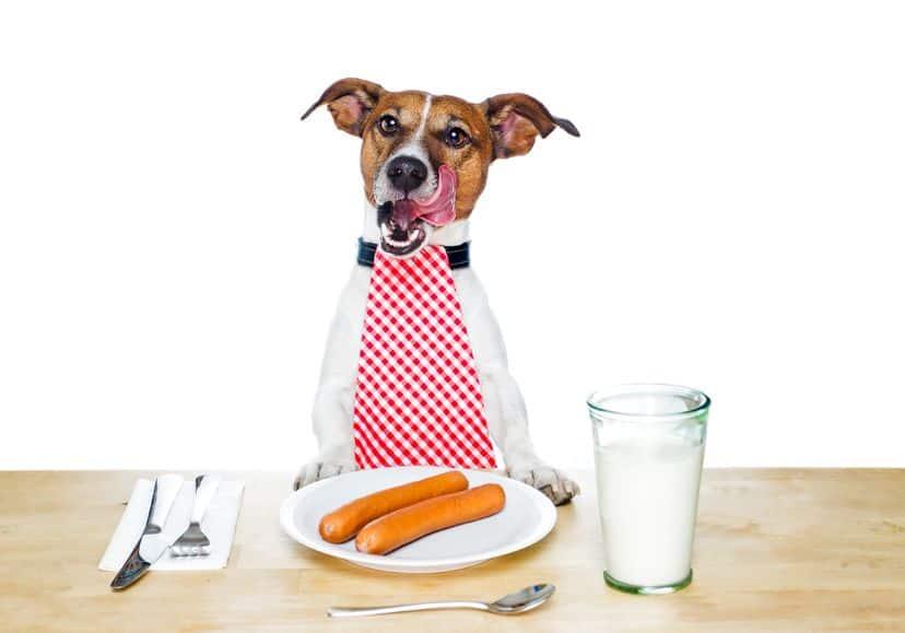 verità e non sulla alimentazione del cane