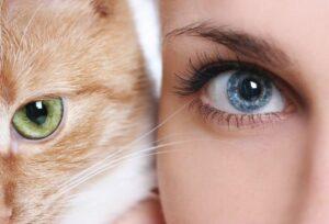 """Come stendere l'ombretto effetto """"occhi di gatto"""""""