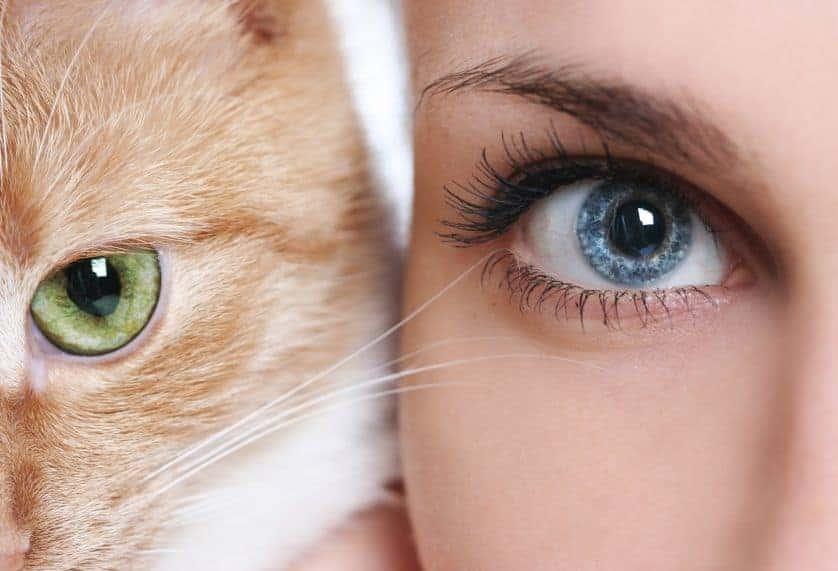 effetto occhi di gatto la guida