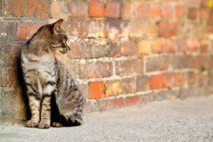 Come allontanare i gatti randagi