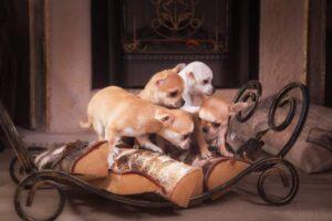 Le migliori razze di cani da appartamento