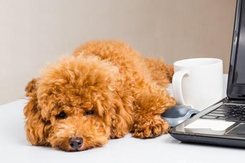 Come riconoscere la leishmaniosi canina: i sintomi