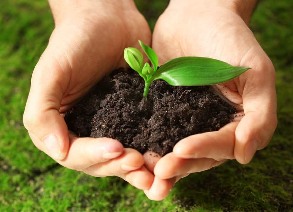 Far germogliare i semi con cotone idrofilo