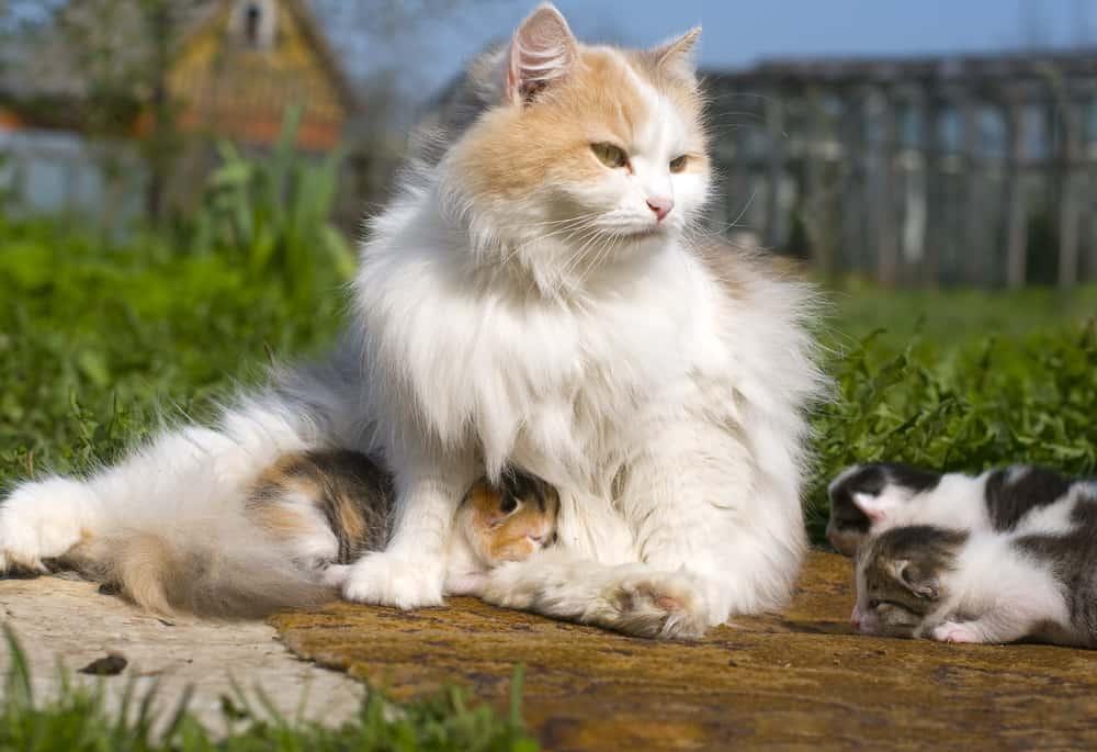 A che età staccare i gattini dalla mamma - eVicus