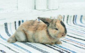 Trucchi e consigli per lavare il coniglio nano