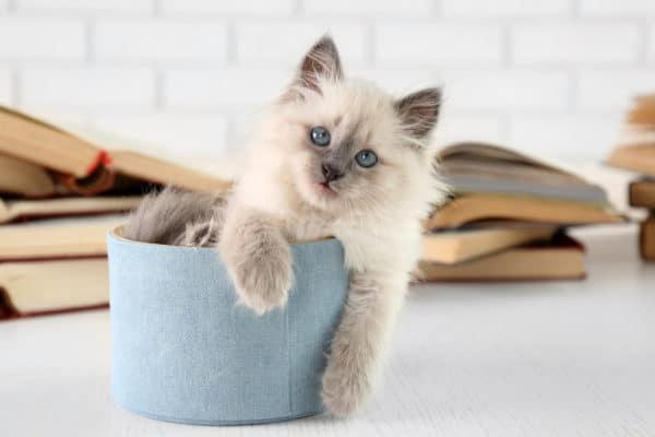 Consigli per come educare un gatto in casa