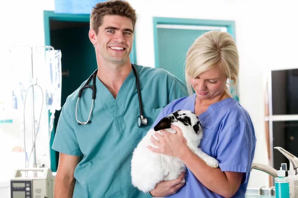 principali malattie coniglio nano