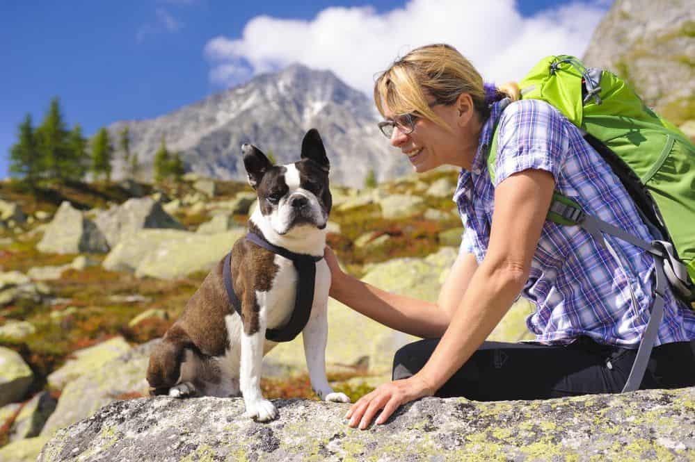 in montagna con il cane