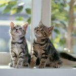 Consigli utili per andare in viaggio con il gatto