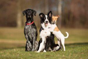 Parassiti e insetti pericolosi per il cane
