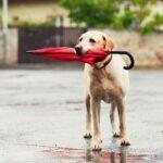 portare fuori il cane anche quando piove