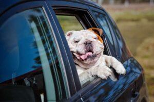 Trucchi e consigli per evitare il mal d'auto del cane