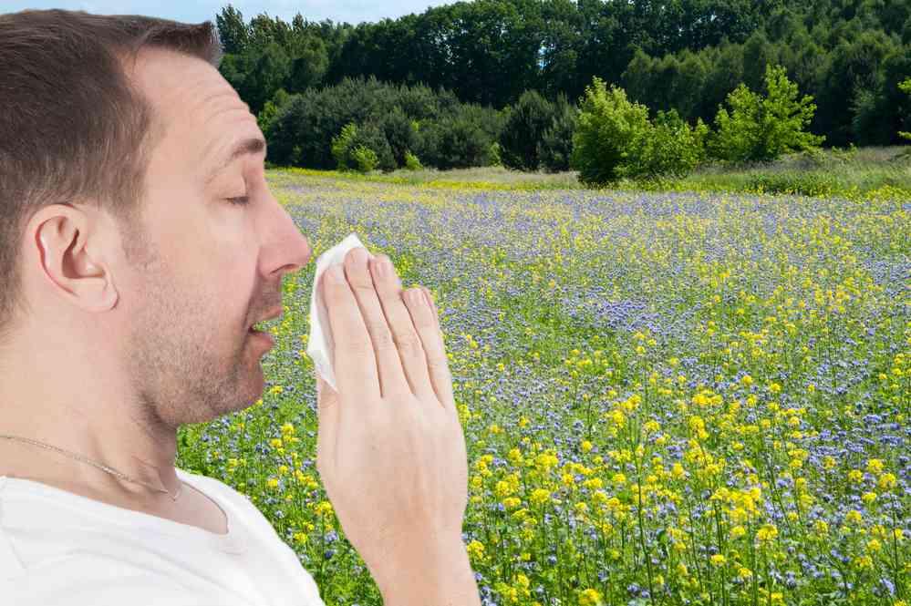 allergie in primavera rimedi naturali