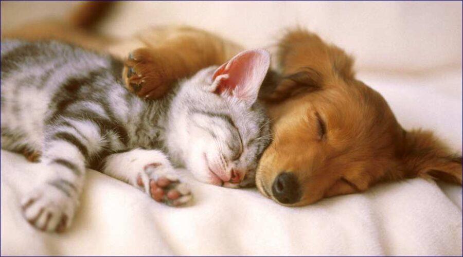 Meglio un cane o un gatto in appartamento?